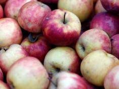 Polish apple sales rising