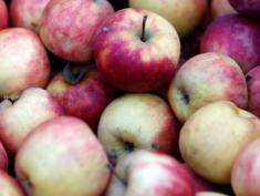 Poland to fight for Indian apple market
