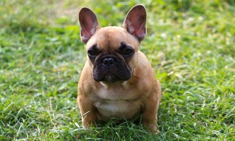 Polish puppies illegally imported into UK?