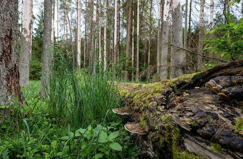 EC to open infringement proceedings over Białowieża logging